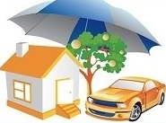 DLM Removals Insurance Options